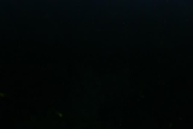Satoh's BLOG : 闇夜のカラス?